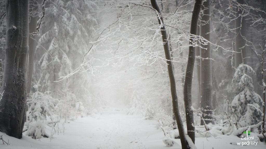 Wyobraźcie sobie ten klimat na żywo. Puszcza Jodłowa zimą.