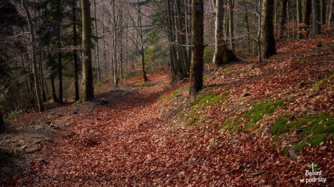 Las nie wygląda specjalnie wiosennie, ale po zimie nie ma już śladu
