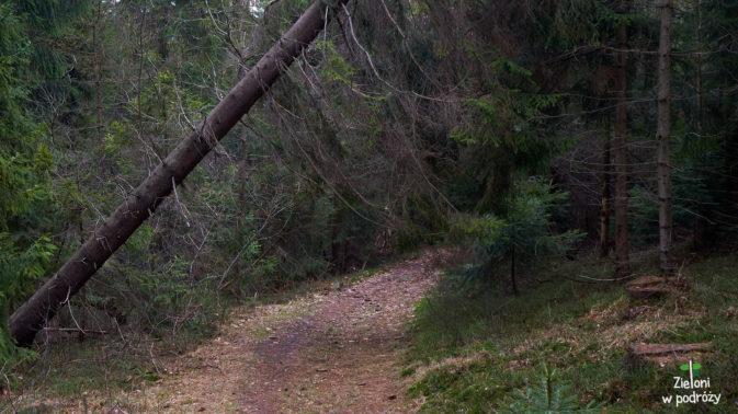 Ostatnie metry i wyjdziemy już z lasu. Zostanie nam krótki marsz między zabudowaniami