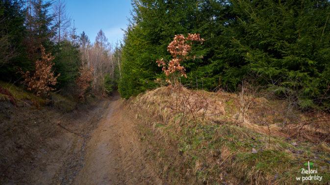 Wchodzimy w las, który będzie nam już towarzyszył praktycznie przez całą wędrówkę