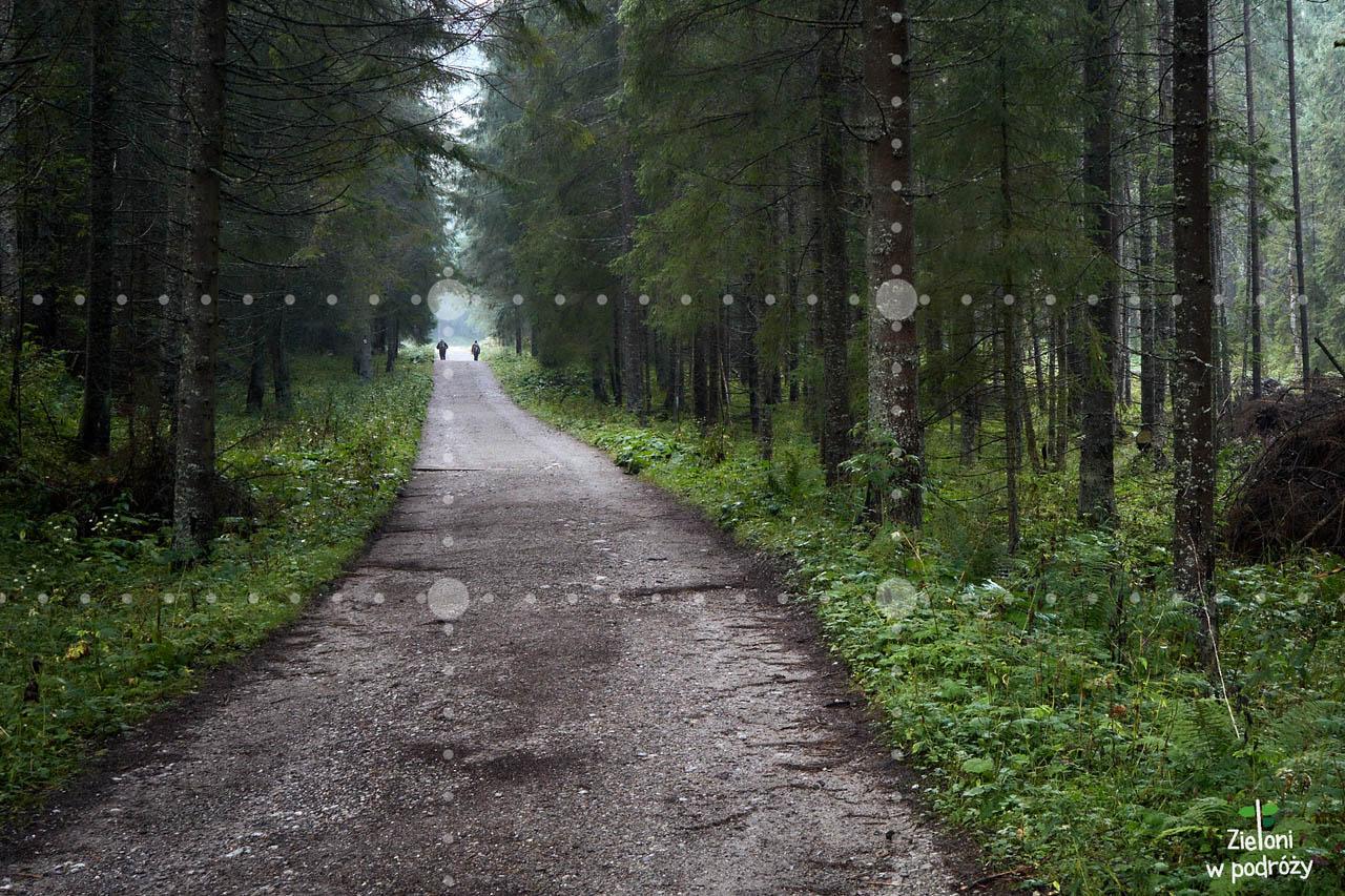 Leśna ścieżka prwadzi wzrok do mocnego punktu, czyli turystów