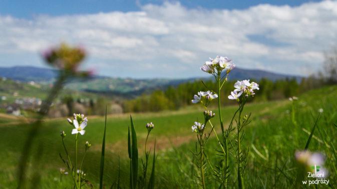 Beskid Niski zwłaszcza wiosną ma swój urok
