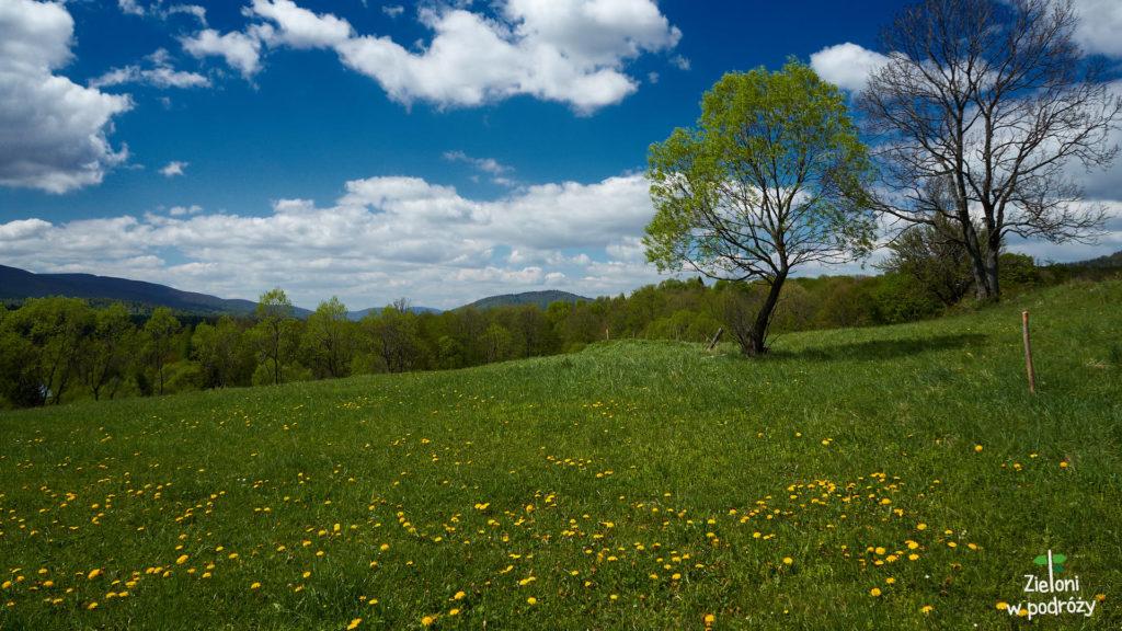 Jak widać, w Bieszczadach wiosna