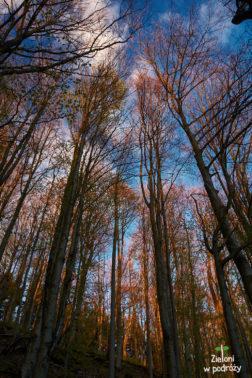 Korony drzew w blasku zachodzącego słońca. Cudnie