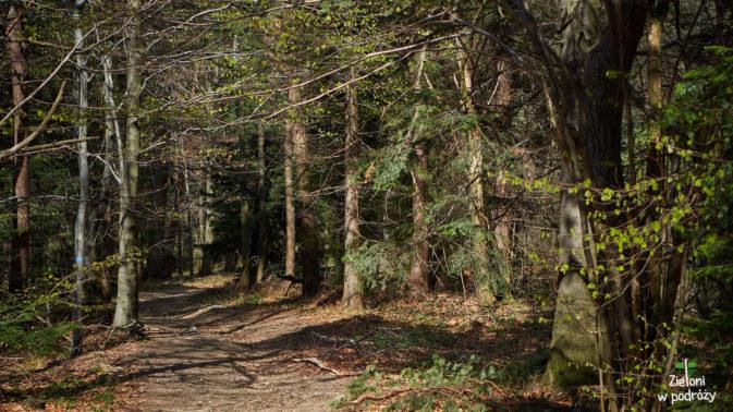 Rozwijające się liście na drzewach powoli zwiastują nadejście wiosny