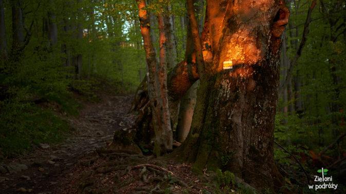 W lesie jest znowu ciepło i co ważne, dalej pięknie