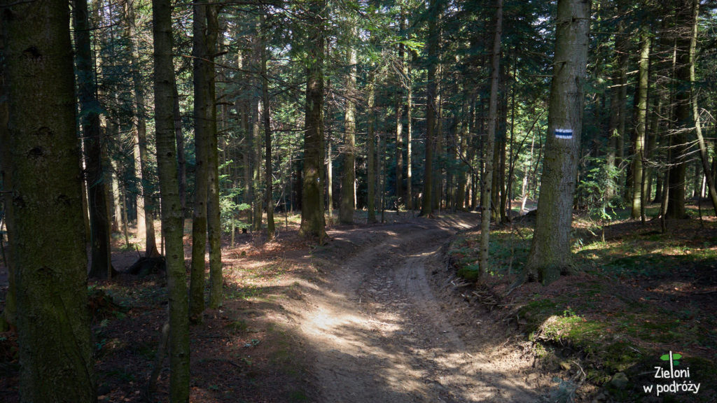W lesie nie jest jeszcze specjalnie zielono