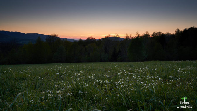 Wiosenna łąka na pożegnanie z Bieszczadami
