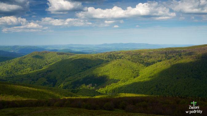 Wszędzie zielone lasy