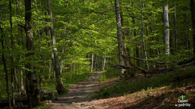 Zielony las pozwala trochę odetchnąć