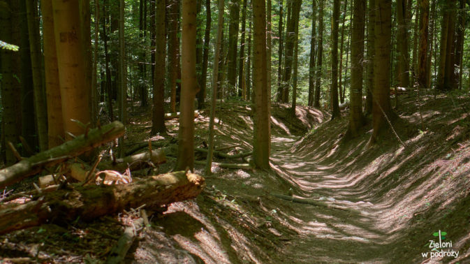 Las nie jest tutaj specjalnie malowniczy