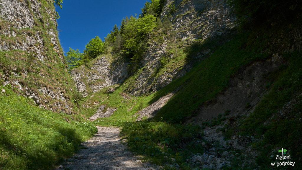 Podążamy żółtym szlakiem przez Wąwóz Szopczański