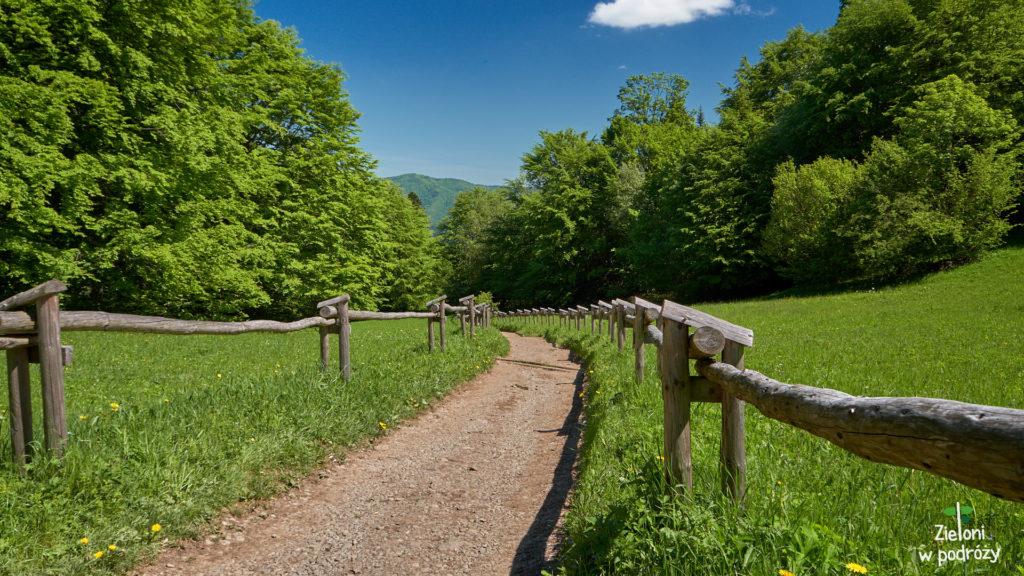 Ta ścieżka prowadzi w stronę Krościenka. Wiosna w pełni