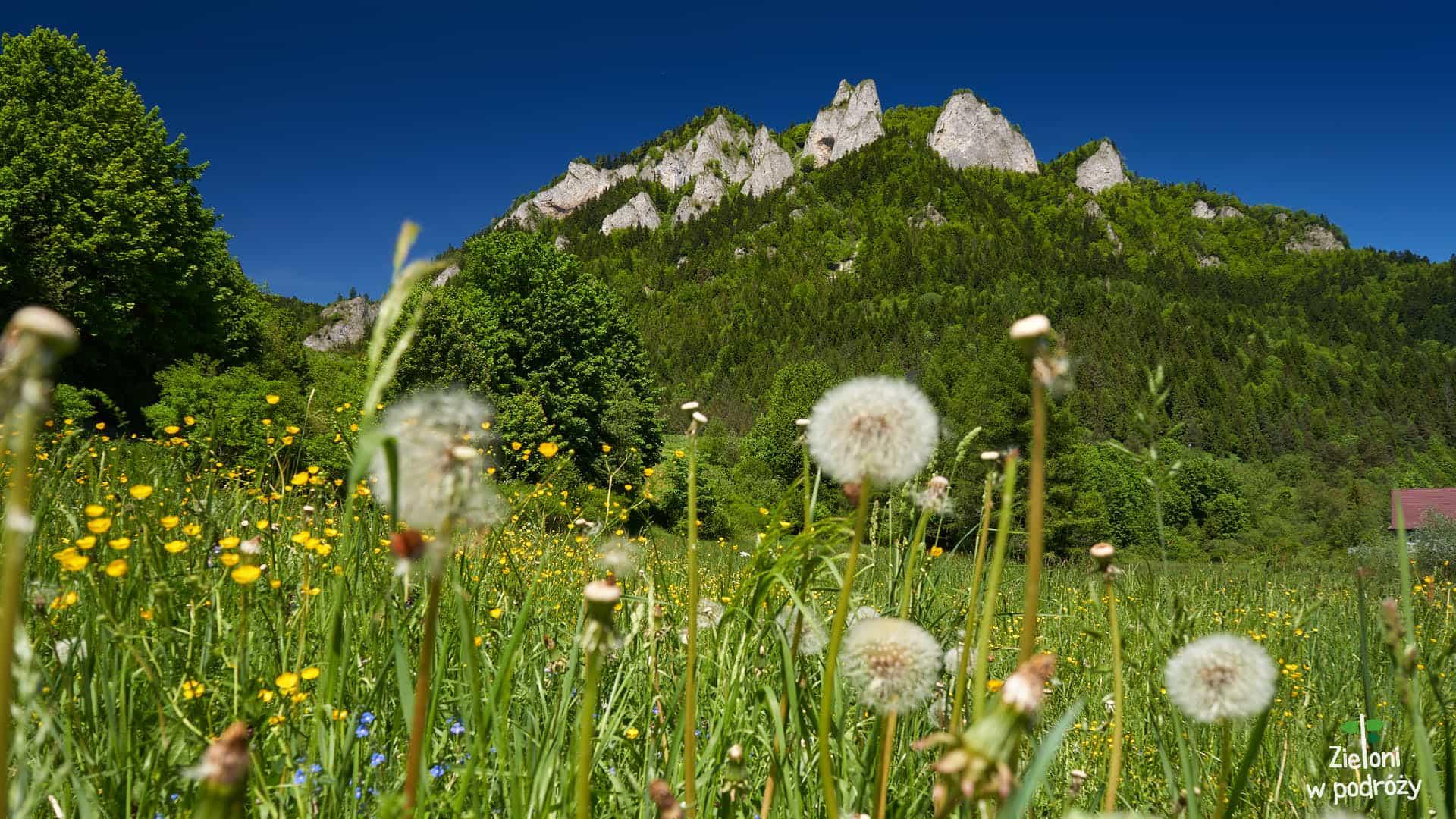 Trzy Korony ze Sromowiec Niżnych – Pieniny dla zielonych