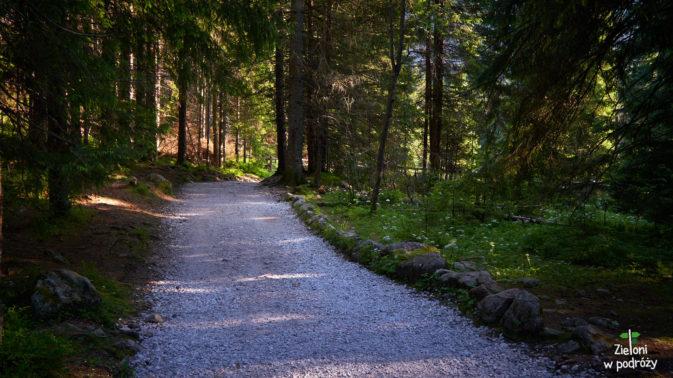 W lesie nareszcie jest odrobinę chłodniej