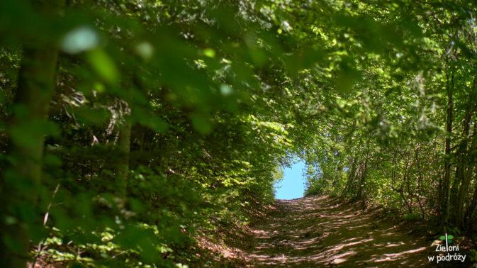 Zielonym tunelem do celu