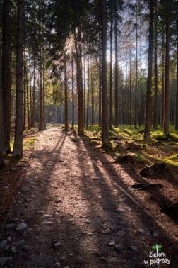 I w lesie może być pięknie