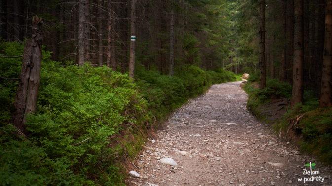 Jak widać, szlak na Rusinową Polanę nie stwarza problemów