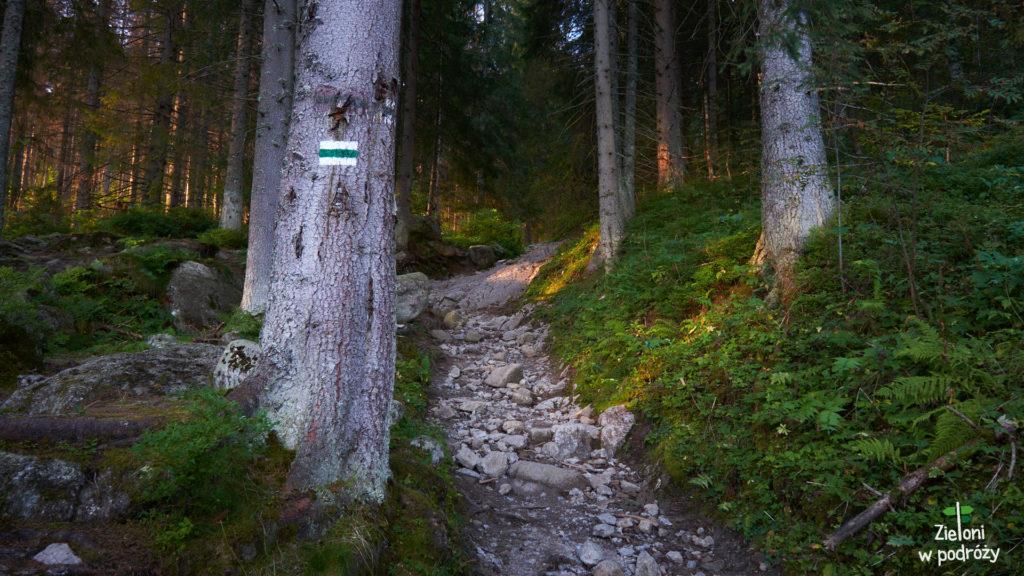 Kto by pomyślał, że w lesie też będzie tak ładnie