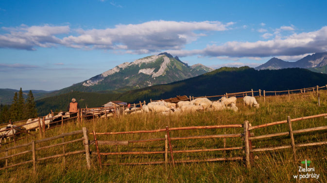 Owce na polanie też już kończą dzień