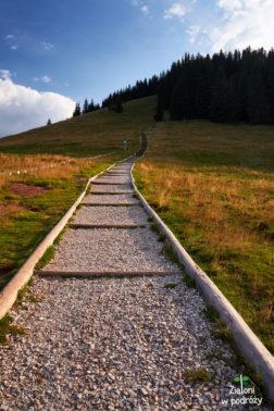 Ruszamy schodami na Gęsią Szyję. Trochę ich jest