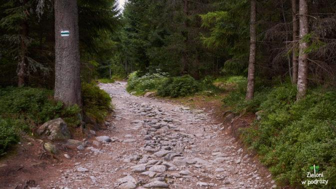 Typowy etap przez las