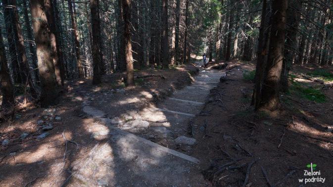 Ścieżka w lesie też nie chce sie skończyć