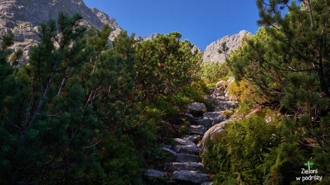 Ruszam zielonym szlakiem do góry