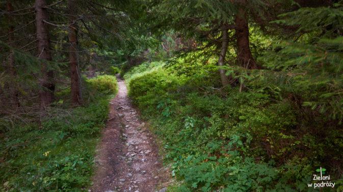 Trasa niemal do samego końca będzie prowadzić już przez las