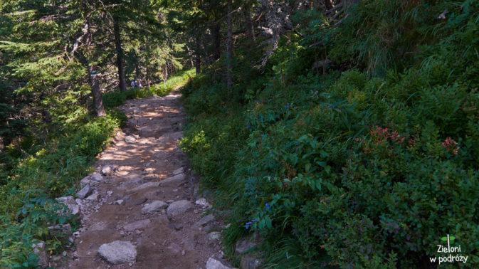 W lesie szlak jest znacznie wygodniejszy, więc chwilami zbiegam