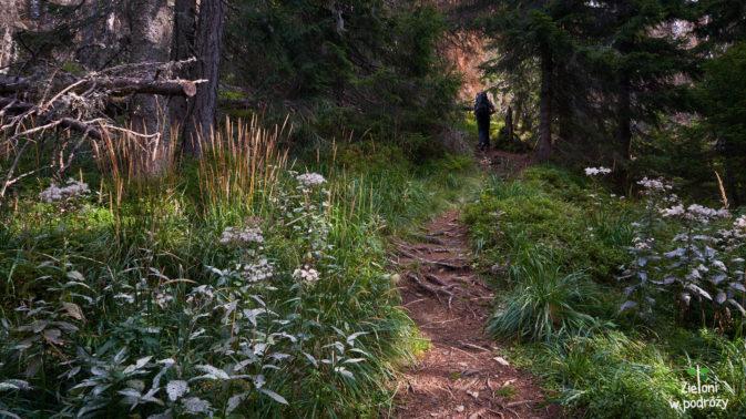 W lesie jest ciekawie, ale czekamy już na widoki. Jakiekolwiek