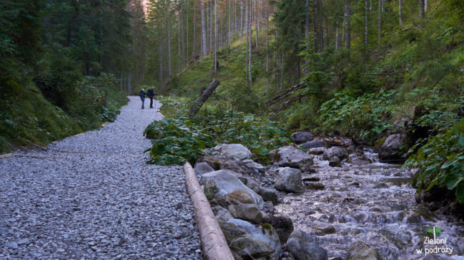 Wygodna, leśna ścieżka