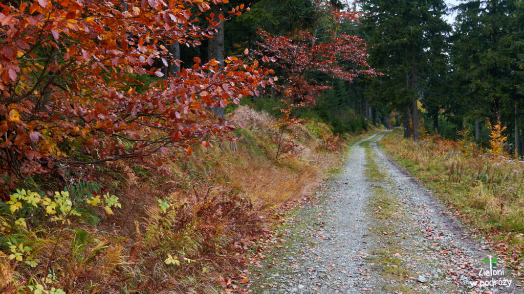 Droga jest szeroka i wygodna