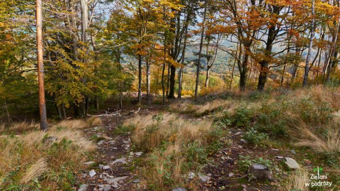 Las, jak las. Tyle, że bardziej kolorowy