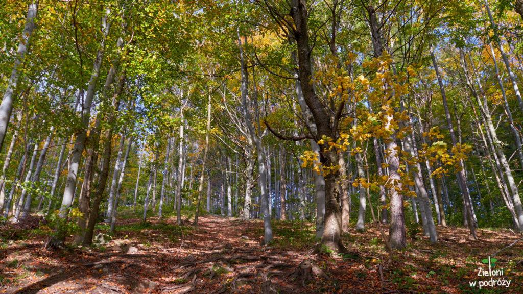 W drodze na Kłodzką Górę to las stanowi największą atrakcję