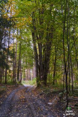 W lesie jest już kolorowo, ale wyżej będzie jeszcze ładniej