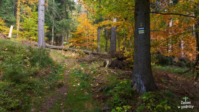 Jesienny las wygląda naprawdę ładnie