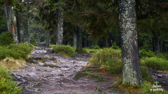 Jeszcze tylko kawałek przez las