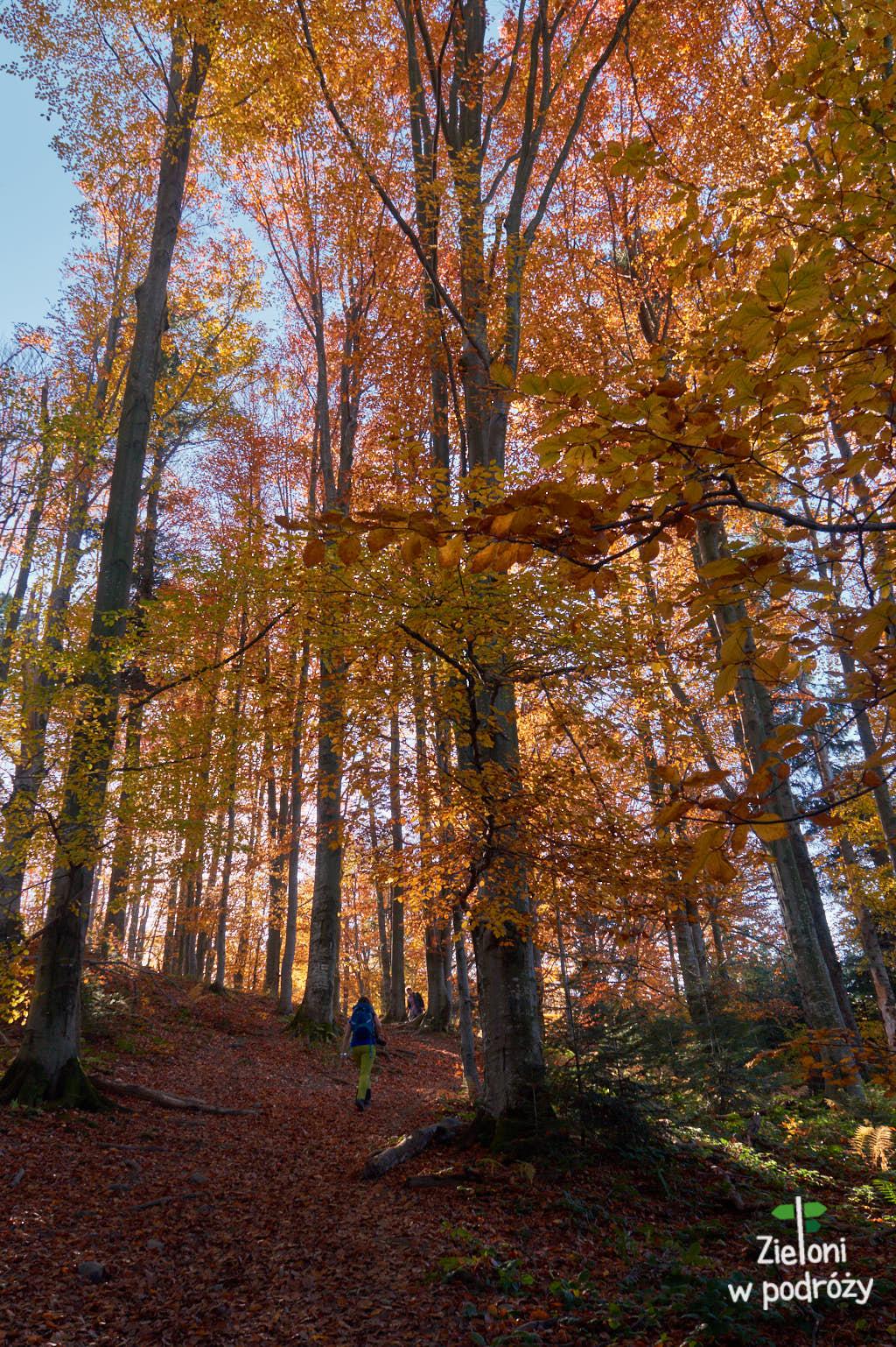 Jesienne lasy w Bieszczadach
