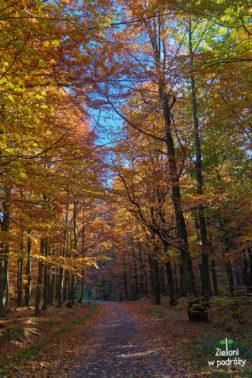 Las jesienią wygląda niesamowicie. Zostaje mi już tylko zejście do Międzygórza