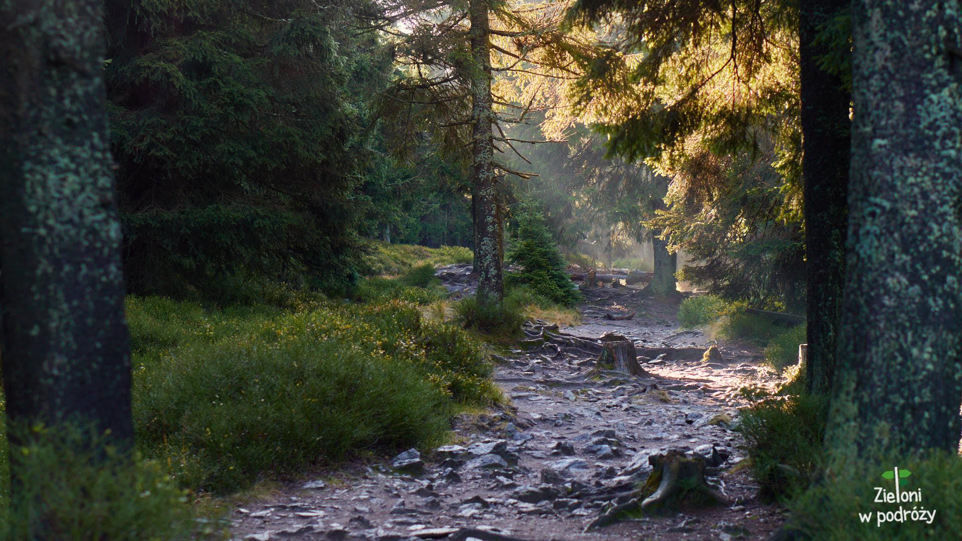 Nawet w lesie jest ładnie