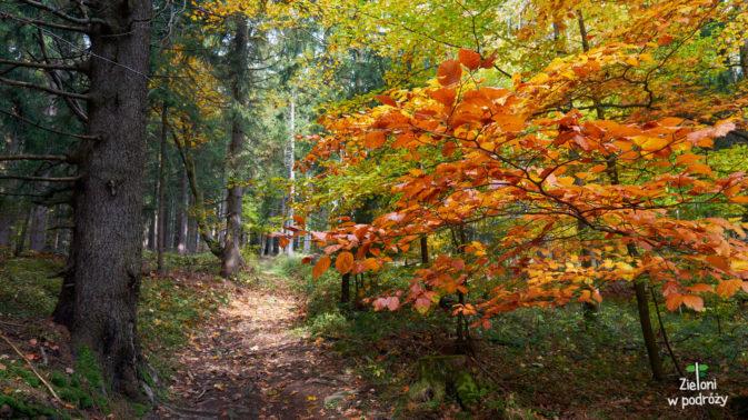 Początkowo szlak na Jagodną może się podobać