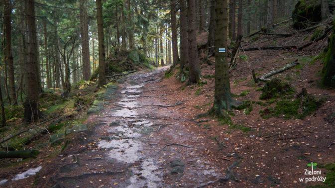 Spacer przez las nie jest już tak emocjonujący