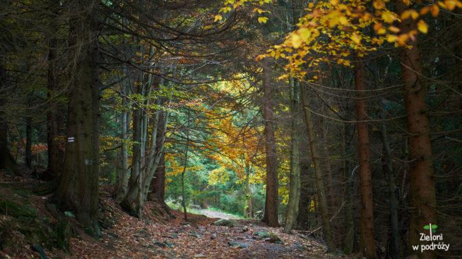 Szlak na Śnieżnik prowadzi teraz lasem