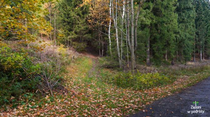 Tak wygląda skręt do lasu