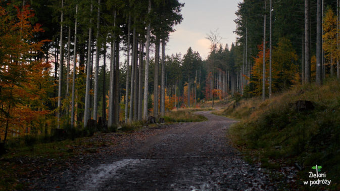 Teraz przez chwilę leśną drogą