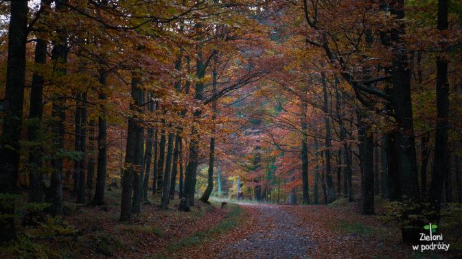 W lesie jeszcze ciemno, ale ruszam na Śnieżnik