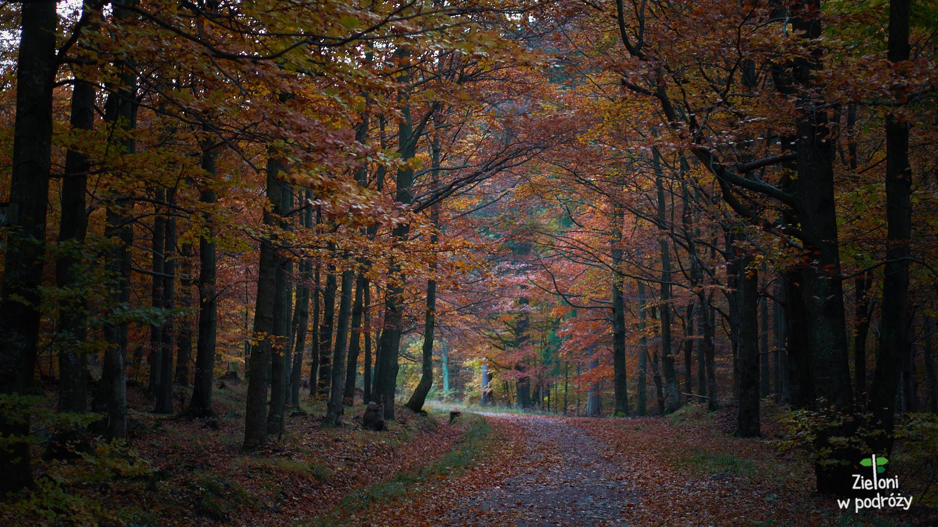 W lesie jest jeszcze dosyć ciemno, ale ruszam z Międzygórza na Śnieżnik