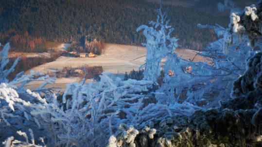 Jaworze zimą