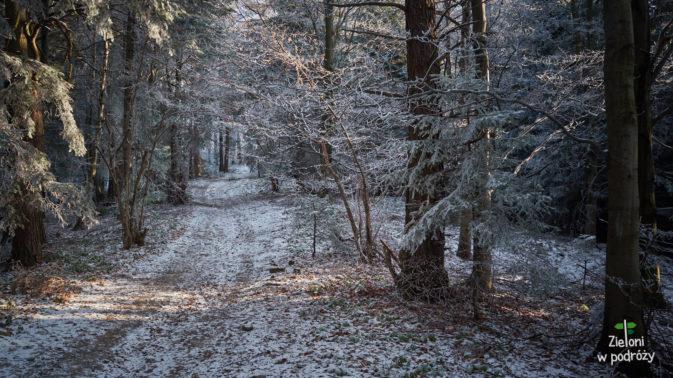 Szlak w późniejszym etapie prowadzi niemal płaskim terenem